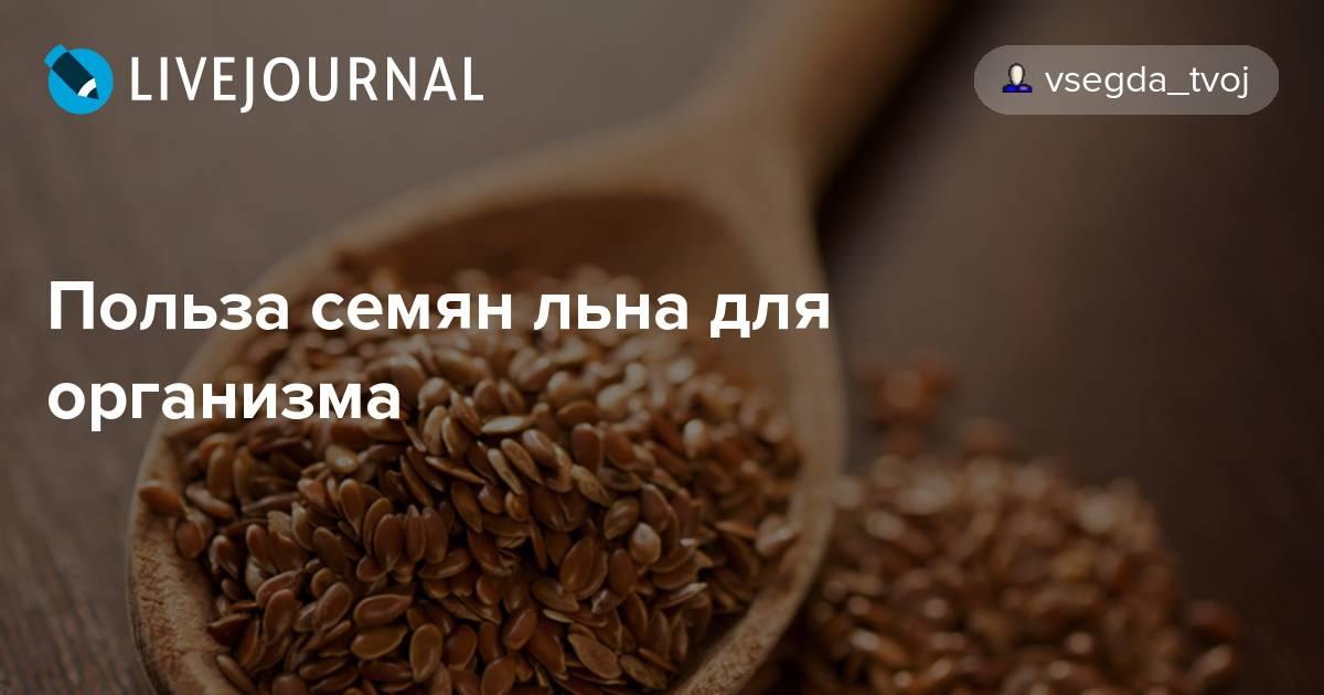 Семена льна: польза, вред и как принимать