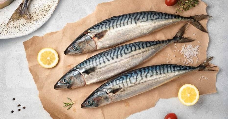 Скумбрия – калорийность, состав и польза для организма