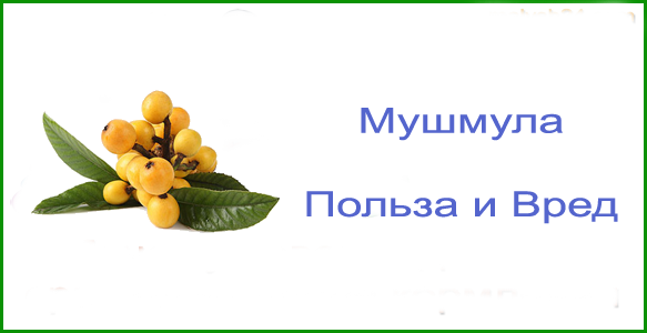 Фрукт мушмула — польза и вред для здоровья