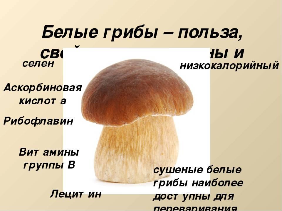 Польза и вред белых грибов для организма человека