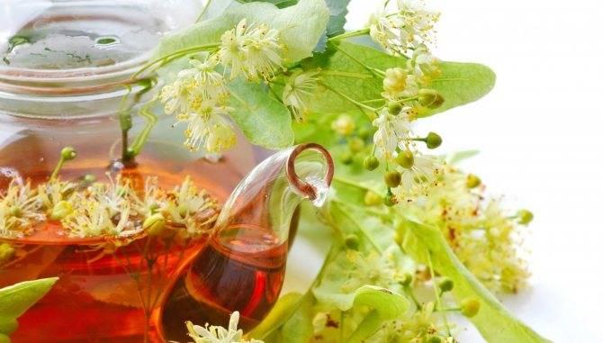 Липовый чай: полезные свойства и противопоказания, отзывы
