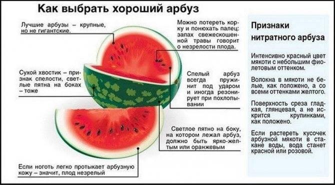 Можно ли кушать арбуз при грудном вскармливании
