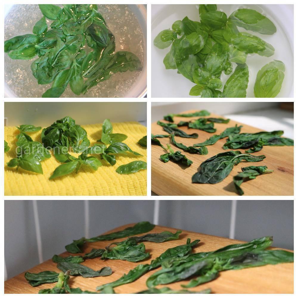Секреты успеха при выращивании базилика из семян в домашних условиях
