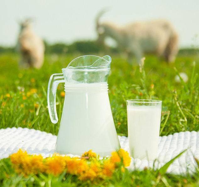 """""""полезные свойства козьего молока, рецепты и противопоказания"""""""