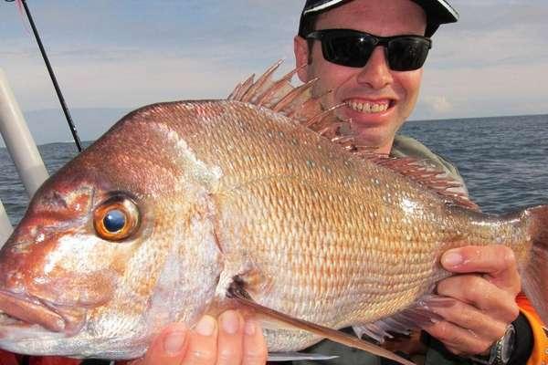 Морской окунь — польза и вред нежирной рыбы. окунь речной польза и вред для организма
