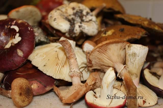 Грибы маслята: польза и вред для организма человека