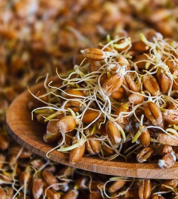 Как употреблять пророщенную пшеницу, польза и вред