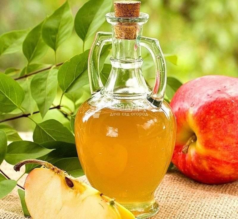 Рецепты сидра из яблок. яблочный сидр — польза и вред для здоровья