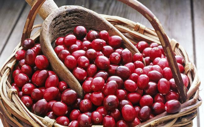 Почему её есть каждый день. «зимняя» ягода клюква польза и вред для здоровья