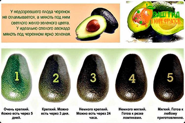 Как хранить авокадо?