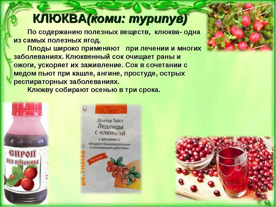 Использование пользы клюквы в медицине: народные рецепты и противопоказания к применнию