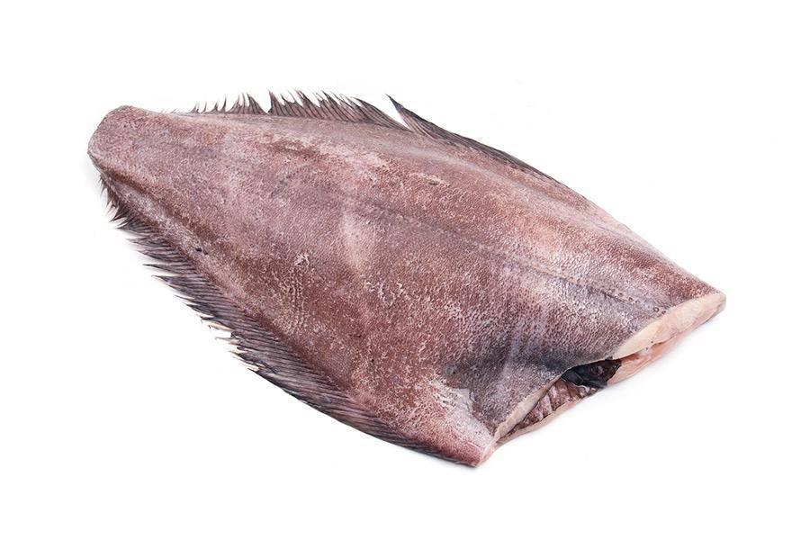 Рыба палтус: описание, польза и возможный вред для организма