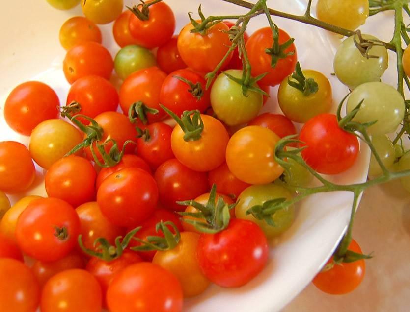 Свойства помидоров черри. польза и вред мини-томатов для организма