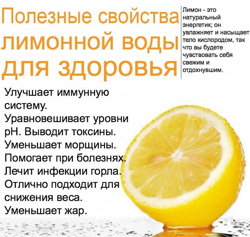 Лимонник китайский — полезные свойства и противопоказания травы