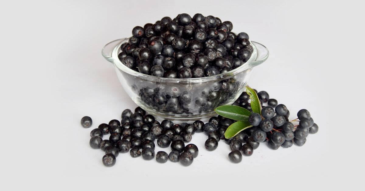 Черноплодка: полезные свойства, противопоказания, польза и вред