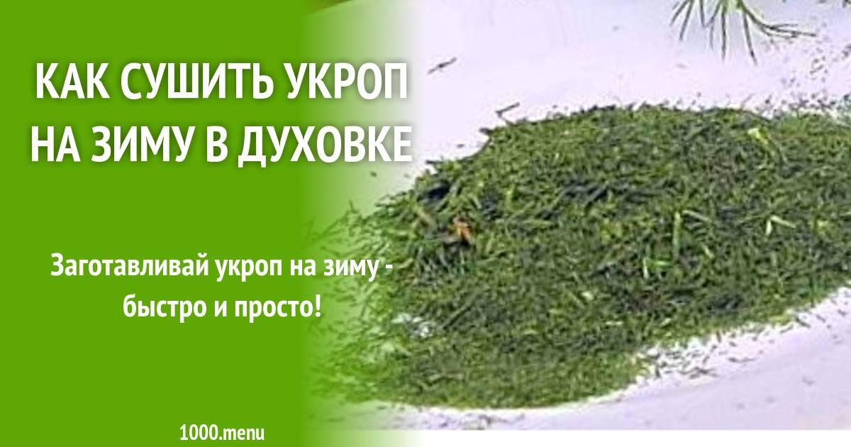 Секреты заготовки укропа на зиму: как правильно сушить пряную траву в домашних условиях?