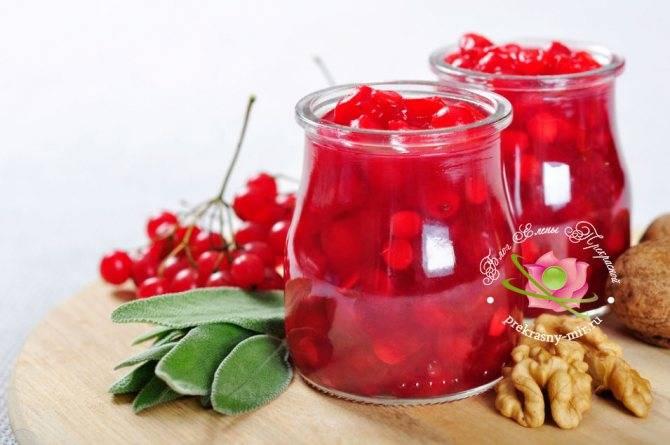 Калина: польза и вред для здоровья – ягоды калины красной, сок, варенье, морс