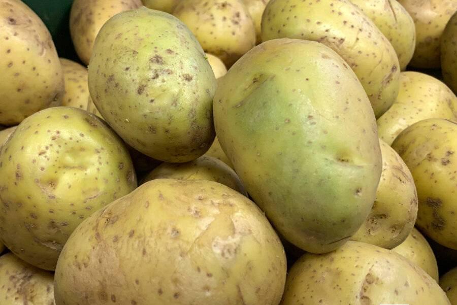 Можно ли есть зеленую картошку?