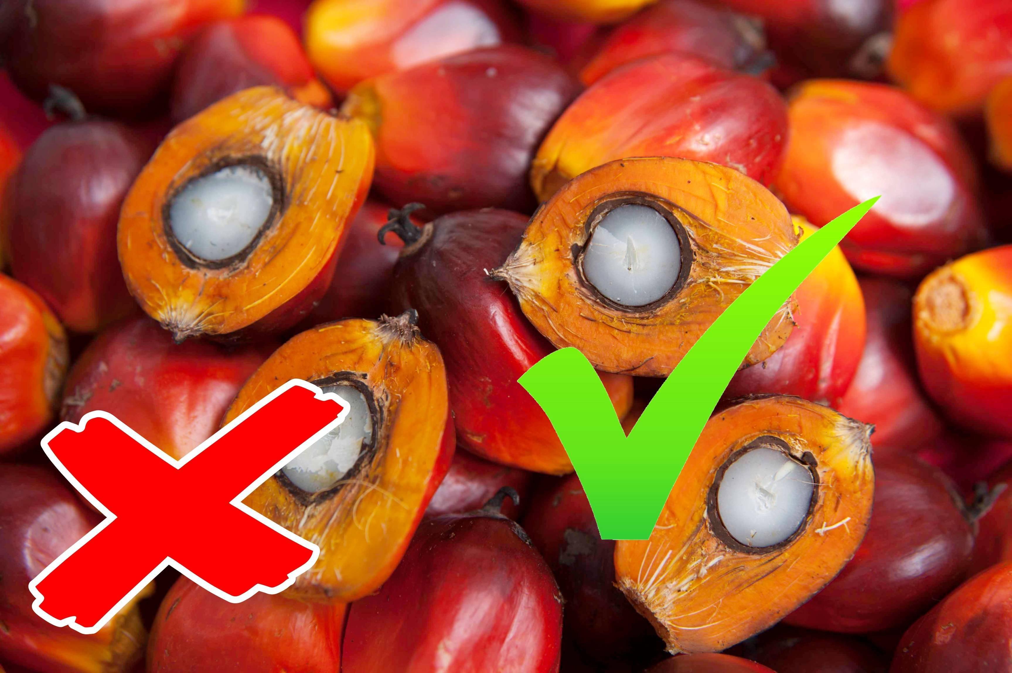 Пальмовое масло: вопросы — ответы
