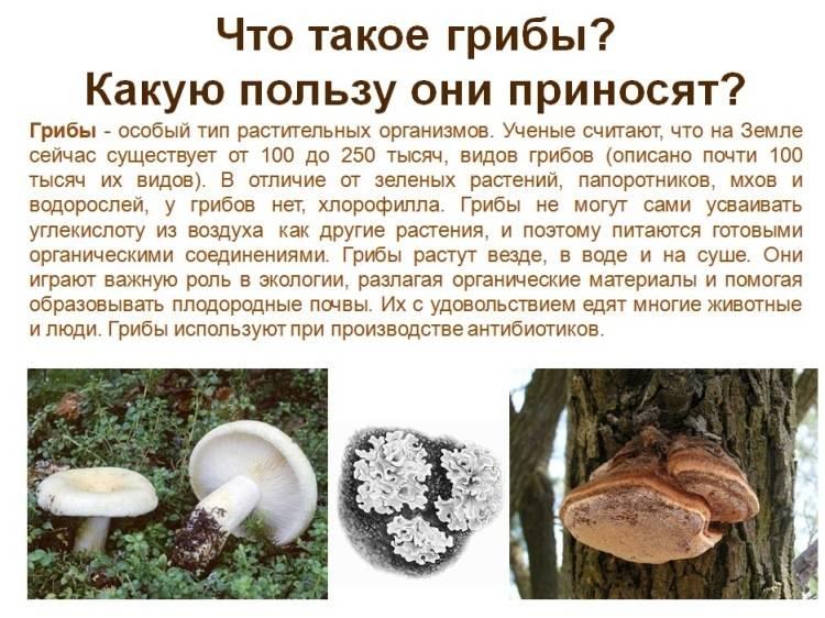 Польза белых грибов для организма: 6 причин употреблять их в пищу