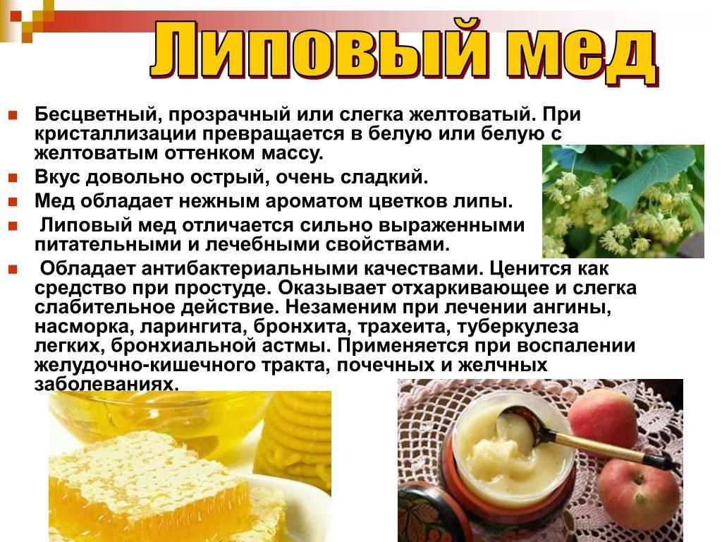 Липовый мед: полезные свойства для организма
