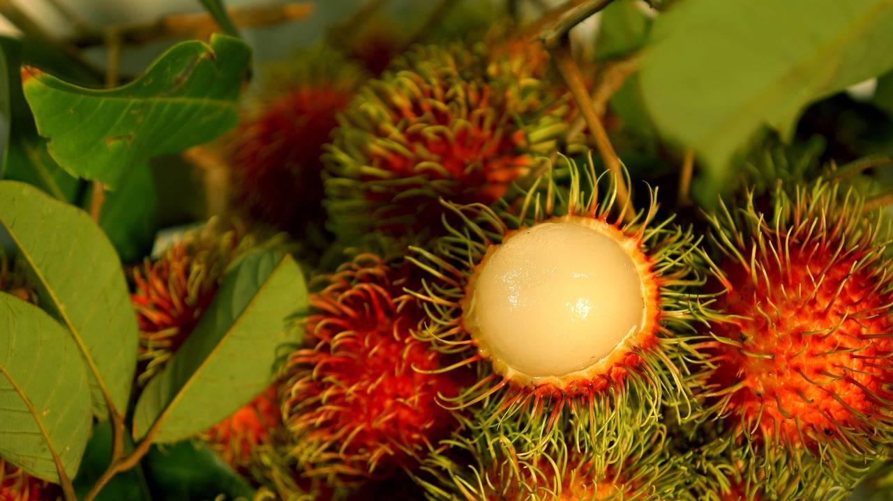 Экзотический фрукт — рамбутан: обсудим его полезные свойства