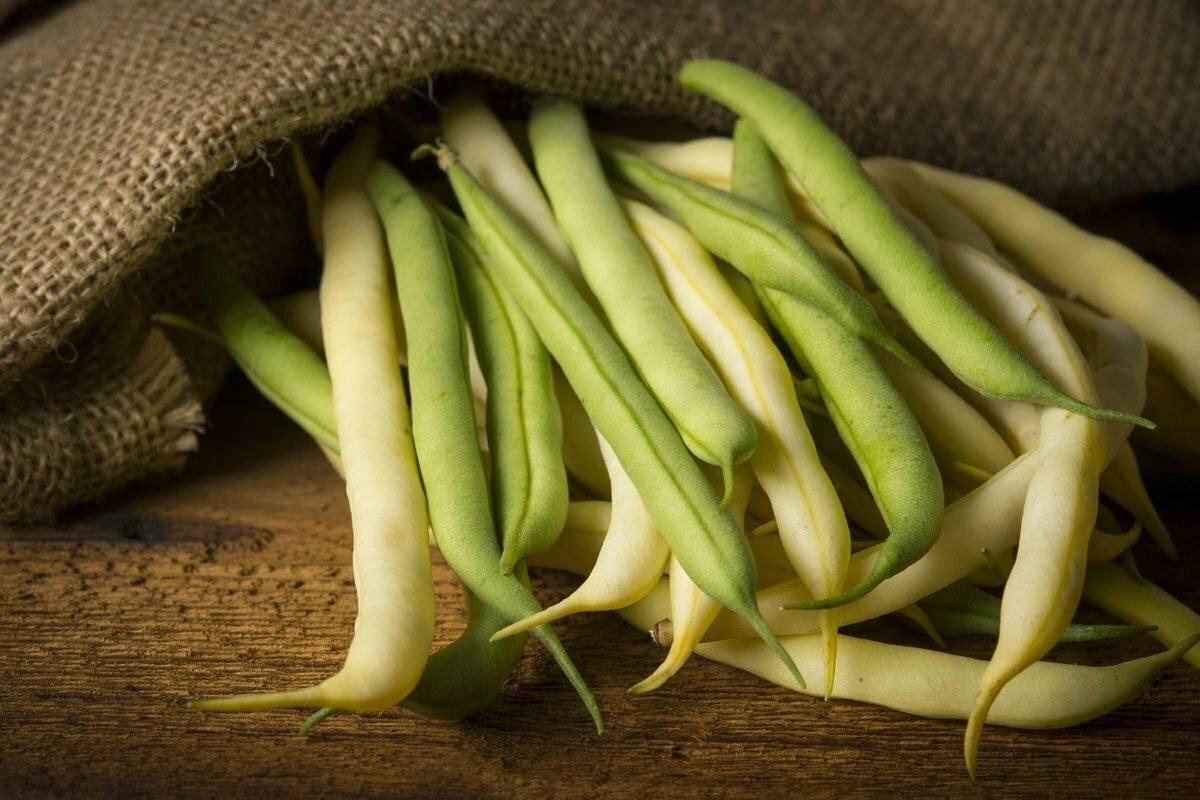 Собрали урожай фасоли? верные способы как хранить фасоль в домашних условиях