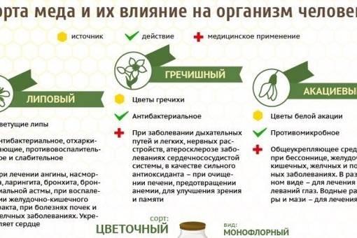 Мед — польза и вред для организма