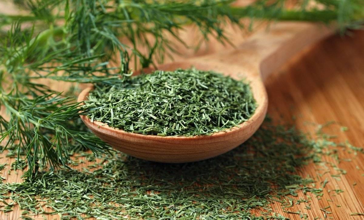 Неизвестные лечебные свойства семян укропа и противопоказания к их применению