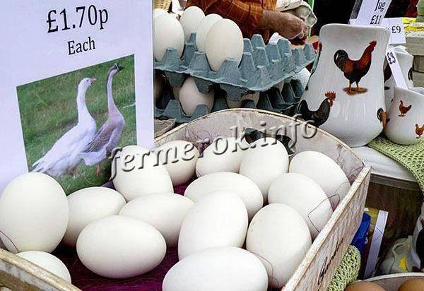 Гусиные яйца: польза и вред, советы по нормам и способам употребления. гусиные яйца: польза и вред, стоимость