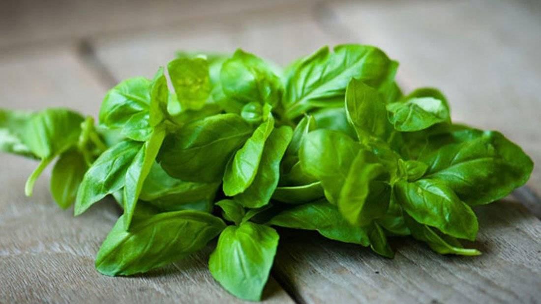 В какие блюда добавляют базилик и как употребляют пряную зелень в пищу