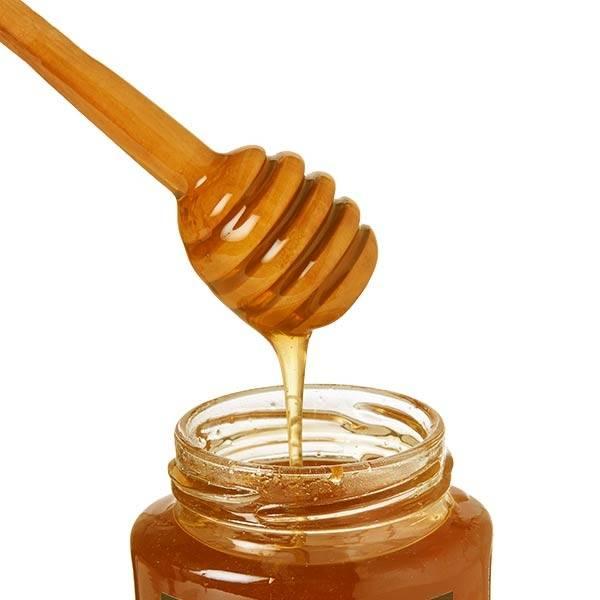 Дягилевый мед: полезные свойства и способы применения