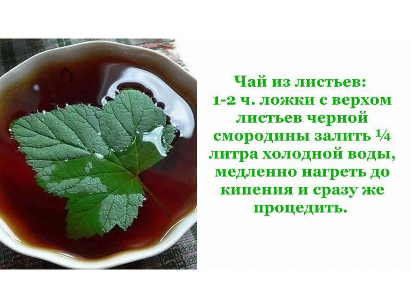 Смородина листья смородины полезные свойства и противопоказания