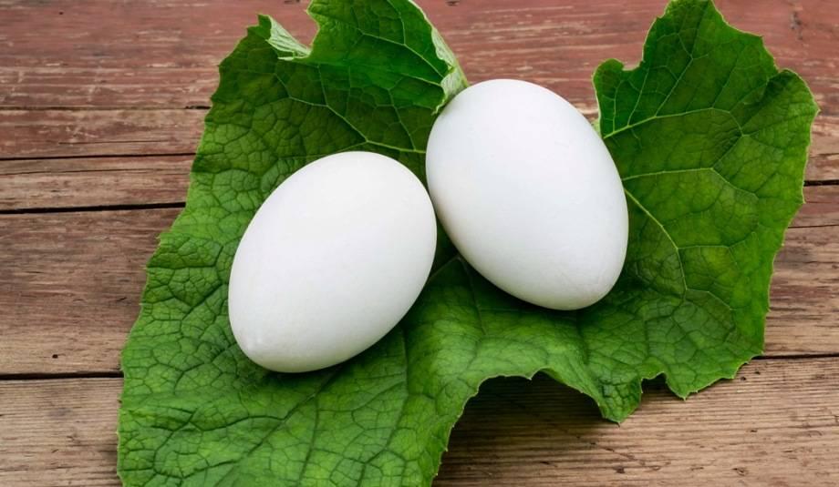 Сырые и вареные яйца и скорлупа: польза и вред для организма. перепелиные, куриные, гусиные, утиные, цецарки, индюшачьи, фазаньи яйца: польза и вред для мужчин, женщин, детей, как принимать?