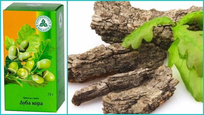 Кора дуба — лечебные свойства и применение