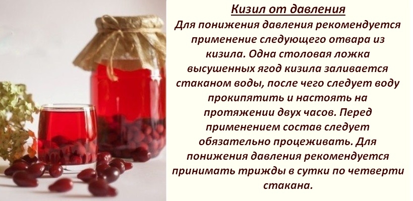 Кизил — полезные свойства и противопоказания для организма
