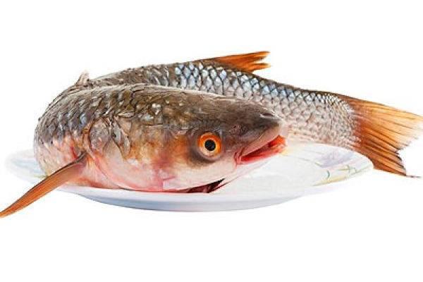Рыба пеленгас содержание полезных веществ, польза и вред, свойства