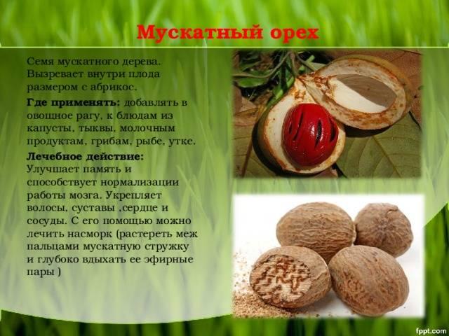 Польза мускатного ореха для женщин