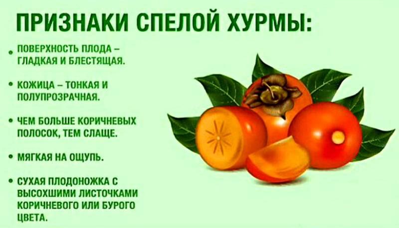 Польза и вред хурмы, свойства, калорийность, противопоказания