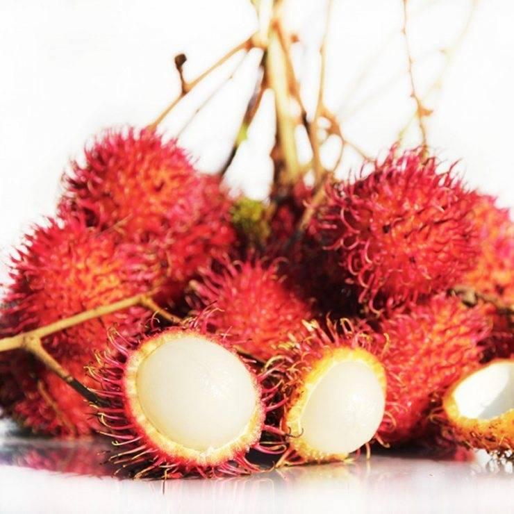 Рамбутан — описание, польза и вред фрукта, состав, калорийность. как вырастить рамбутан дома и как правильно есть плоды