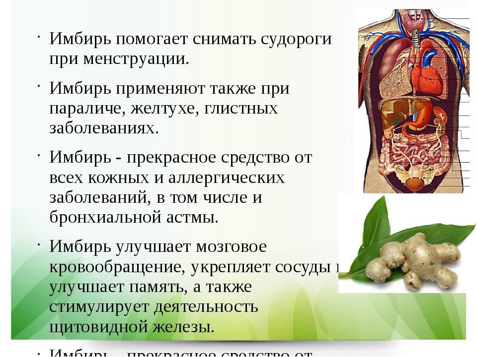Маринованный имбирь: польза и вред, лечебные свойства и рецепты