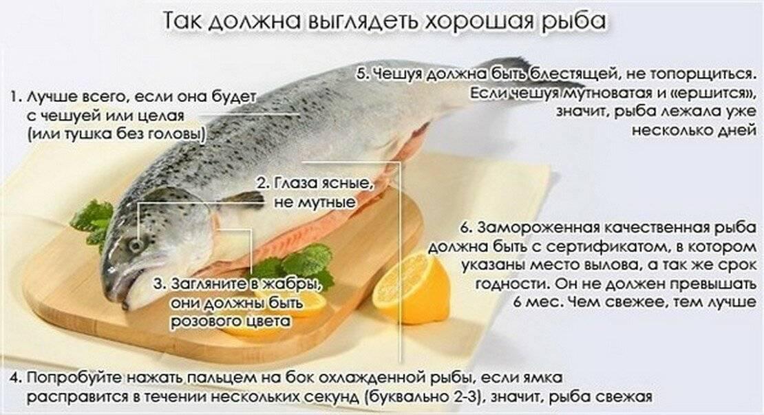 Щука: полезные свойства, противопоказания, польза и вред