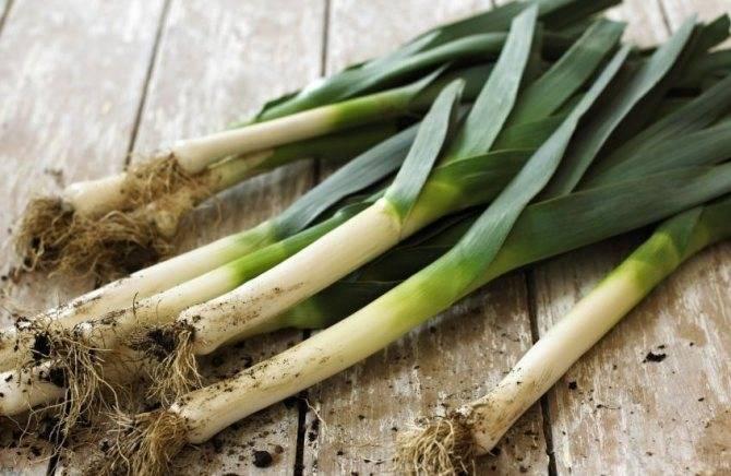 Польза и вред лука порея для здоровья: чем хорош и как правильно использовать