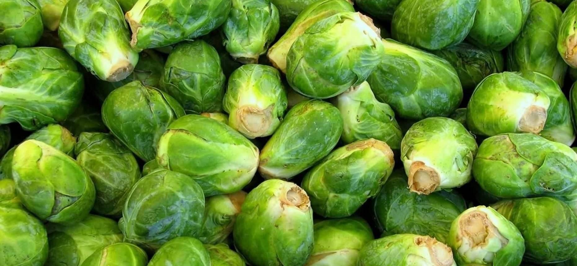 Брюссельская капуста: польза и вред, лечебные свойства для организма человека