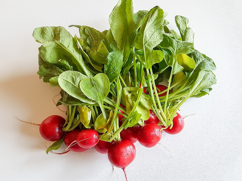 Редиска — источник здоровья для организма женщины. есть ли вред и как применять овощ с максимальной пользой?