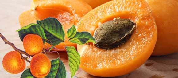 Полезные свойства абрикосов для здоровья человека