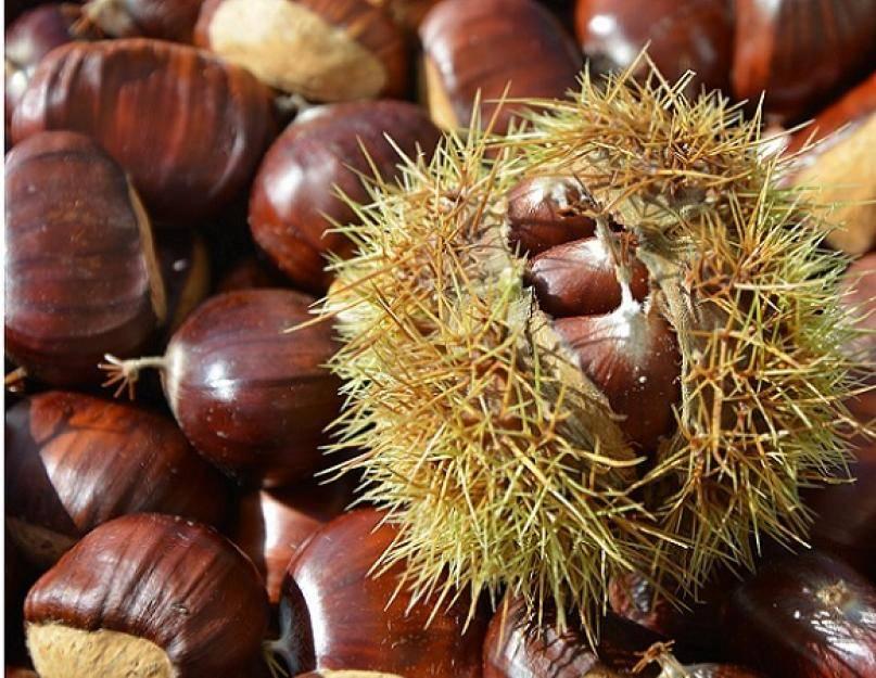 Польза каштанов — полезные и вредные свойства орехов каштана. обзор вариантов приготовления (90 фото и видео)
