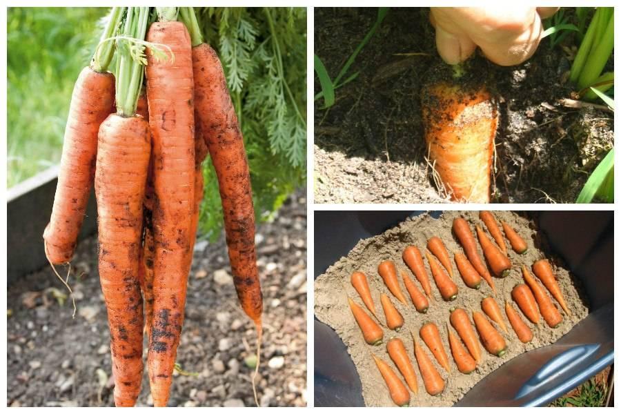 Как правильно сушить морковь в духовке, сохраняя ее витамины?