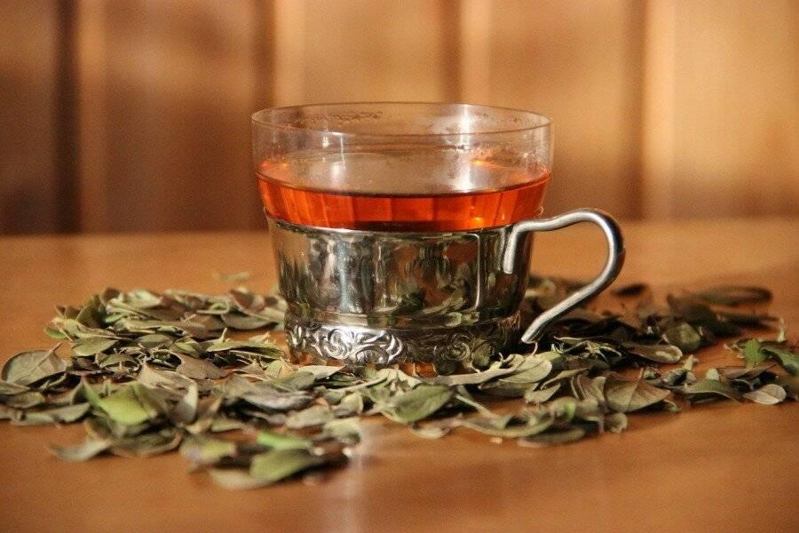 Чай из листьев брусники – польза и вред