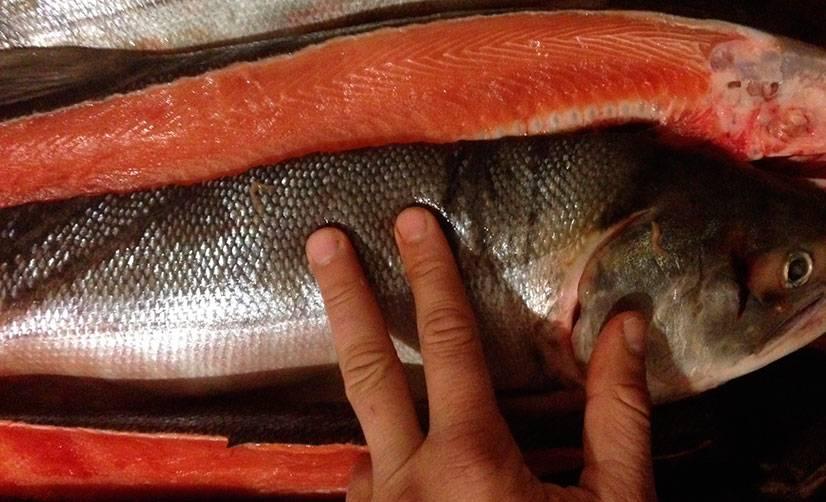 Кижуч, что это за рыба, ее польза и вред